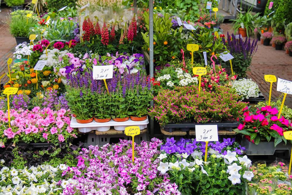 La precaria situación del mercado floral en Málaga